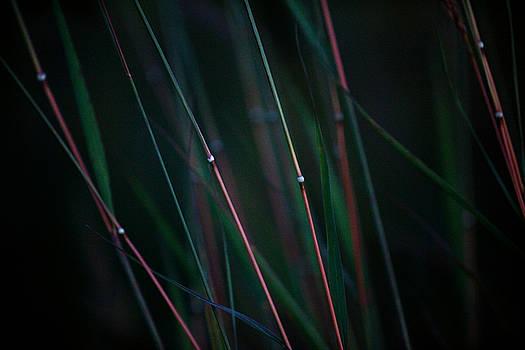 Autumn Grass by Jane Melgaard