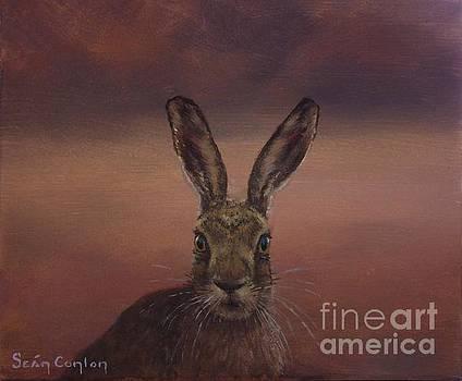Autumn Hare by Sean Conlon