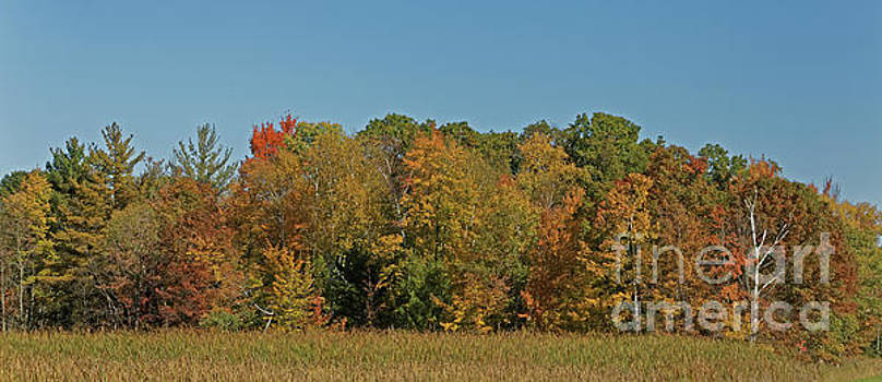 Autumn in Northern Wisconsin by Natural Focal Point Photography
