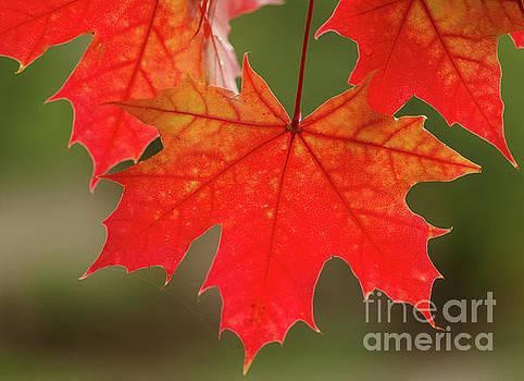 Autumn In Oregon by Nick Boren