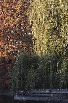 Autumn In The Danube Park by Zeljko Dozet
