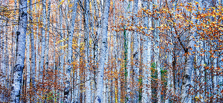 Autumn in the Forest by Marion McCristall