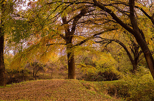 Autumn In The Hill Country by Bob Marquis
