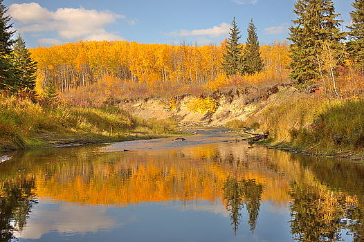 Autumn in Whitemud Ravine by Jim Sauchyn