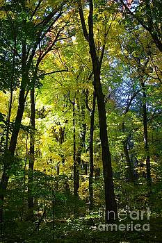 Autumn in Wisconsin by Veronica Batterson