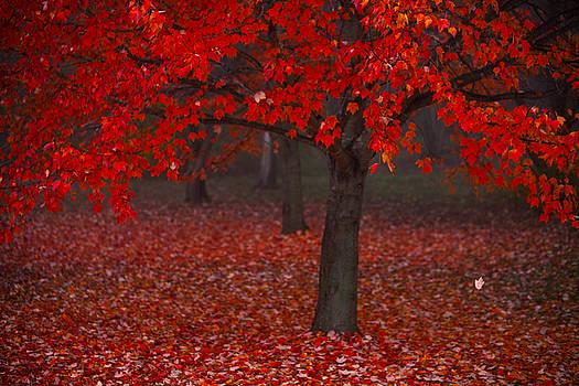 Autumn by Jane Melgaard