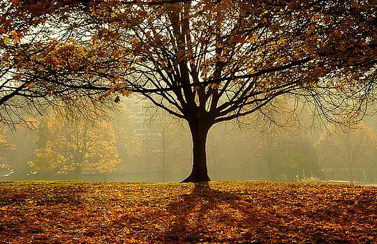 Autumn by Kobby Dagan