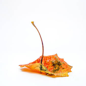 BERNARD JAUBERT - Autumn leaf