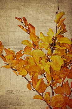 Angela Doelling AD DESIGN Photo and PhotoArt - Autumn leaves