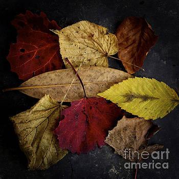 BERNARD JAUBERT - Autumn leaves