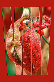 Autumn Leaves  by Geraldine Scull