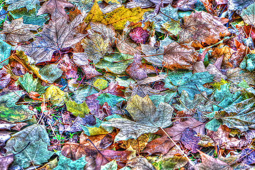 Autumn Leaves in Central Park by Randy Aveille