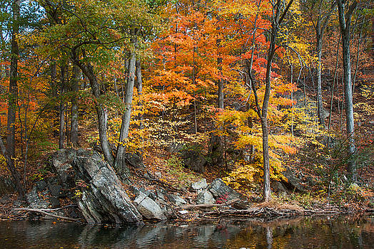 Autumn Leaves by Mark Cranston