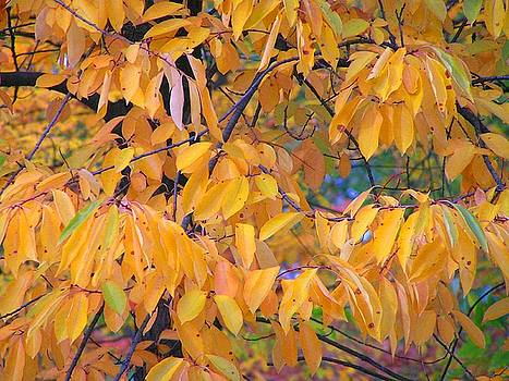 Autumn Leaves by Oleg Zavarzin