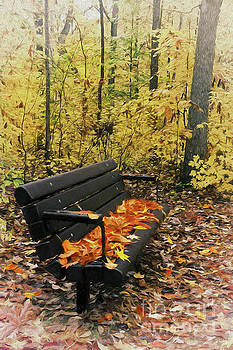 Autumn Leaves on a Bench AP by Dan Carmichael