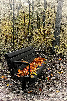 Autumn Leaves on a Bench by Dan Carmichael