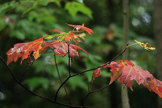 Autumn Leaves by Randy Bayne