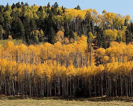 Autumn Leaves, Rio Arriba County, NM by Troy Montemayor