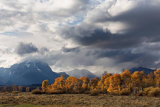 Autumn Leaves Teton County WY by Troy Montemayor
