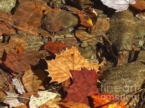 Autumn Leaves Under Water by Anita Adams