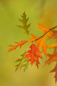 Autumn Magic by Marilyn Peterson