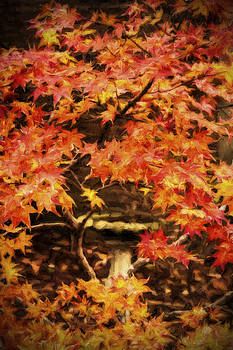 Barry Jones - Autumn Maple