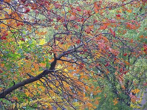 Autumn Melancholy by Oleg Zavarzin