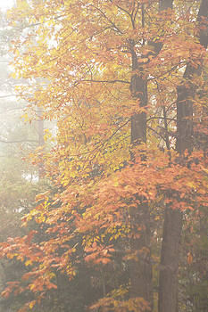 Misty Autumn Morning of Colorful Foliage by Suzanne Powers