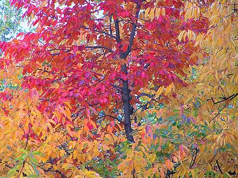 Autumn Mood by Oleg Zavarzin
