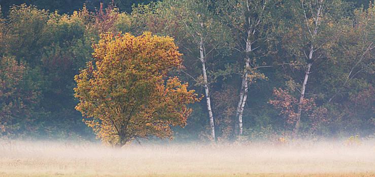 Autumn morning in forest by Sergey Ryzhkov