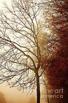 Autumn Morning by Stephanie Frey