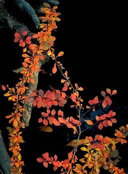 Autumn Night by GJ Blackman