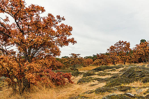 Autumn Oaks 3 by Claude Dalley