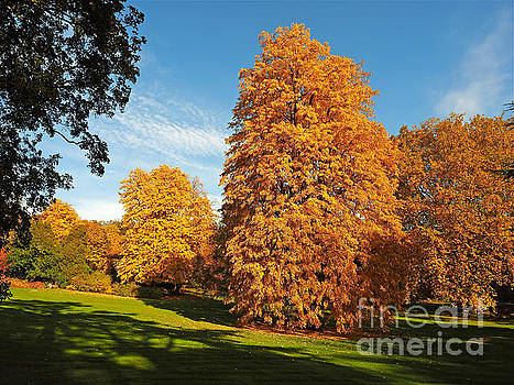 Autumn Park Colours by Alex Cassels