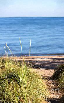 Autumn Path Through Beach Grass by Barbara McMahon