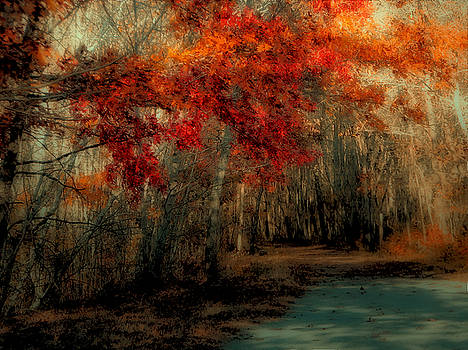 Autumn Pathway by GJ Blackman