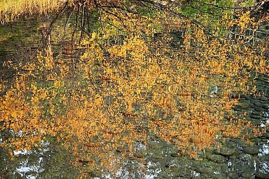 Larry Ricker - Autumn Reflections