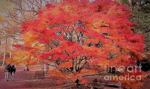 Autumn Romance by John Williams