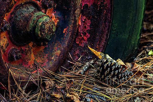 Autumn Rust by Doug Sturgess