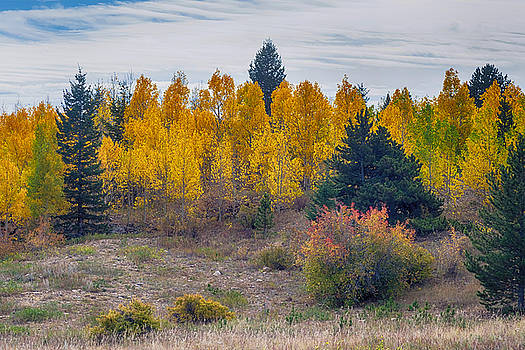 Autumn Season Aspen Grove Panorama Scenic View by James BO  Insogna