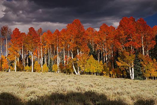Autumn Season by Dewey Farmer