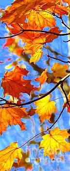 Autumn secret gift by France Laliberte