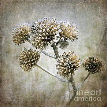 Autumn Seed Heads II by Tamara Becker