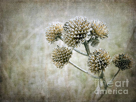 Autumn Seed Heads III by Tamara Becker