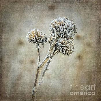 Autumn Seed Heads IV by Tamara Becker