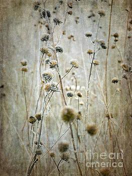 Autumn Seed Heads by Tamara Becker
