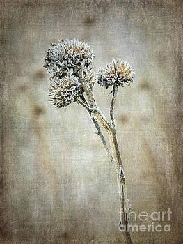 Autumn Seed Heads V by Tamara Becker
