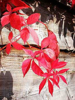 Autumn Shadows by Lucia Del