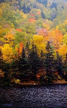 Autumn Shore by Frank Wilson
