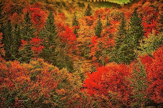 Autumn Spectacle by Dennis Baswell